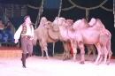 Circus-Carl-Busch-Ravensburg-090610-Bodensee-Community-seechat_de-IMG_2086.JPG