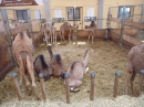 Kamelhof-Afrikafest-2010-Rotfelden-060810-Bodensee-Community-seechat_de-P1000301.JPG
