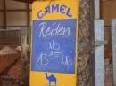 Kamelhof-Afrikafest-2010-Rotfelden-060810-Bodensee-Community-seechat_de-P1000333.JPG