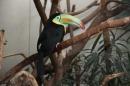 Wilhelma-Zoo-Stuttgart-050211-Bodensee-Community-seechat_de-IMG_8457.JPG