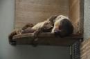Wilhelma-Zoo-Stuttgart-050211-Bodensee-Community-seechat_de-IMG_8478.JPG