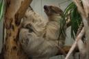Wilhelma-Zoo-Stuttgart-050211-Bodensee-Community-seechat_de-IMG_8480.JPG