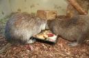 Wilhelma-Zoo-Stuttgart-050211-Bodensee-Community-seechat_de-IMG_8497.JPG