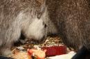Wilhelma-Zoo-Stuttgart-050211-Bodensee-Community-seechat_de-IMG_8498.JPG