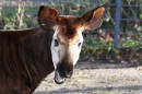 X3-Wilhelma-Zoo-Stuttgart-050211-Bodensee-Community-seechat_de-IMG_8766.JPG