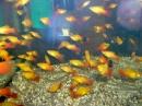Aquafisch_Friedrichshafen_19022011-seechat_deDSCN2122.JPG