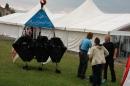 Matchrace-2011-Langenargen-Bodensee-Community-26052011-SEECHAT_DE-IMG_6559.JPG