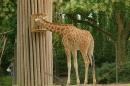X2-Zoo-Basel-090811-Bodensee-Community-SEECHAT_DE-DSC06107.JPG