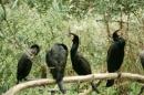 Zoo-Basel-090811-Bodensee-Community-SEECHAT_DE-DSC06009.JPG