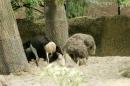 Zoo-Basel-090811-Bodensee-Community-SEECHAT_DE-DSC06014.JPG