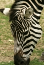 Zoo-Basel-090811-Bodensee-Community-SEECHAT_DE-DSC06018.JPG