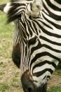 Zoo-Basel-090811-Bodensee-Community-SEECHAT_DE-DSC06019.JPG