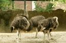 Zoo-Basel-090811-Bodensee-Community-SEECHAT_DE-DSC06020.JPG