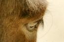 Zoo-Basel-090811-Bodensee-Community-SEECHAT_DE-DSC06024.JPG