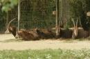 Zoo-Basel-090811-Bodensee-Community-SEECHAT_DE-DSC06036.JPG