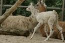 Zoo-Basel-090811-Bodensee-Community-SEECHAT_DE-DSC06042.JPG