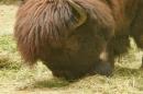 Zoo-Basel-090811-Bodensee-Community-SEECHAT_DE-DSC06054.JPG