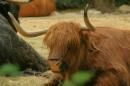 Zoo-Basel-090811-Bodensee-Community-SEECHAT_DE-DSC06061.JPG