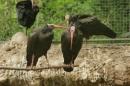 Zoo-Basel-090811-Bodensee-Community-SEECHAT_DE-DSC06062.JPG