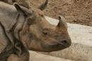 Zoo-Basel-090811-Bodensee-Community-SEECHAT_DE-DSC06069.JPG
