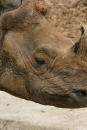 Zoo-Basel-090811-Bodensee-Community-SEECHAT_DE-DSC06074.JPG