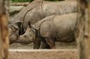 Zoo-Basel-090811-Bodensee-Community-SEECHAT_DE-DSC06079.JPG