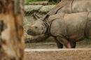 Zoo-Basel-090811-Bodensee-Community-SEECHAT_DE-DSC06080.JPG