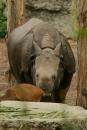 Zoo-Basel-090811-Bodensee-Community-SEECHAT_DE-DSC06091.JPG