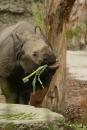Zoo-Basel-090811-Bodensee-Community-SEECHAT_DE-DSC06094.JPG