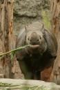 Zoo-Basel-090811-Bodensee-Community-SEECHAT_DE-DSC06097.JPG