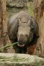 Zoo-Basel-090811-Bodensee-Community-SEECHAT_DE-DSC06098.JPG