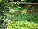 Haustierhof-Reutemuehle-13082011-Bodensee-Community-seechat_de-_102.JPG