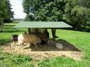 Haustierhof-Reutemuehle-13082011-Bodensee-Community-seechat_de-_113.JPG