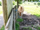 Haustierhof-Reutemuehle-13082011-Bodensee-Community-seechat_de-_116.JPG