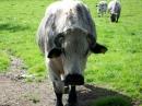 Haustierhof-Reutemuehle-13082011-Bodensee-Community-seechat_de-_119.JPG
