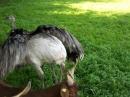 Haustierhof-Reutemuehle-13082011-Bodensee-Community-seechat_de-_135.JPG