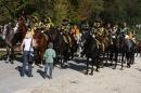 Hengstparade-Marbach-2011-011011-Bodensee-Community-SEECHAT_DE-IMG_0145.JPG