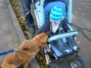 Apfelsonntag-Stockach-091011-Bodensee-Community-seechat_de-DSCN2591.JPG