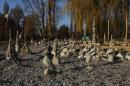 Volker-Paul-Stein-Balance-Radolfzell-Bodensee-Community-12112011-SEECHAT_DE-IMG_8844.JPG
