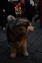 seechat-Bodensee-Community-Treffen-Weihnachtsmarkt-Konstanz-111211-SEECHAT_DE-_75.JPG
