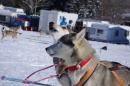 Schlittenhunderennen-Bernau-04022012-Bodensee-Community-seechat_de_102.jpg