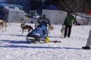 Schlittenhunderennen-Bernau-04022012-Bodensee-Community-seechat_de_108.jpg