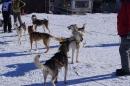 Schlittenhunderennen-Bernau-04022012-Bodensee-Community-seechat_de_121.jpg