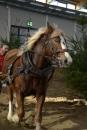 Pferd-Bodensee-18022012-Bodensee-Community-seechat_de-.JPG