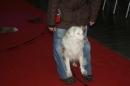 Hundemesse-2012-Ravensburg-250212-Bodensee-Community-seechat_de-IMG_0656.JPG