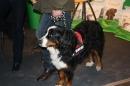 Hundemesse-2012-Ravensburg-250212-Bodensee-Community-seechat_de-IMG_0658.JPG