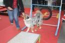 Hundemesse-2012-Ravensburg-250212-Bodensee-Community-seechat_de-IMG_0665.JPG