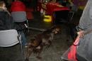 Hundemesse-2012-Ravensburg-250212-Bodensee-Community-seechat_de-IMG_0680.JPG