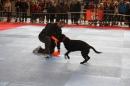 Hundemesse-Mein-Hund-Ravensburg-260212-Bodensee-Community-SEECHAT_DE-IMG_9278.JPG