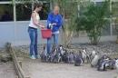 ZZ1-Zoo-Z_rich-26042012-Bodensee-Community-Seechat-de63.jpg